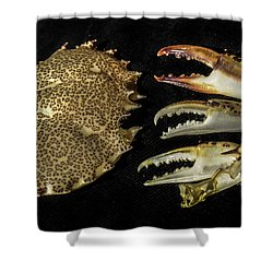 Coastal Leftovers Shower Curtain