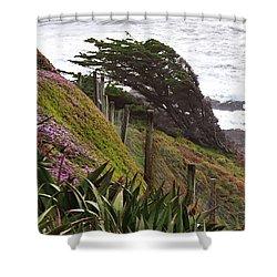 Coastal Windblown Trees Shower Curtain