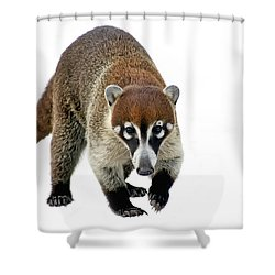 Coatimundi Shower Curtain by Teresa Zieba