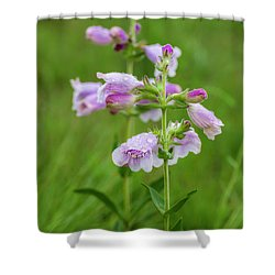 Cobea After Rain Shower Curtain