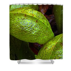 Cobra Lily Love Shower Curtain