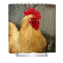 Cock Of The Walk Shower Curtain