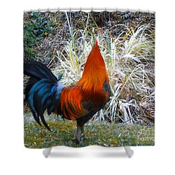Shower Curtain featuring the photograph Cock Walk II by Donna Dixon