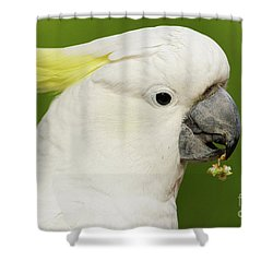 Cockatoo Close Up Shower Curtain by Craig Dingle