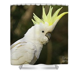 Cockatoo Crest Shower Curtain