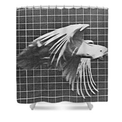 Cockatoo In Flight Shower Curtain