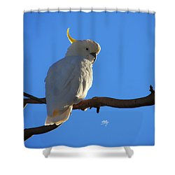 Cockatoo Shower Curtain by Linda Hollis