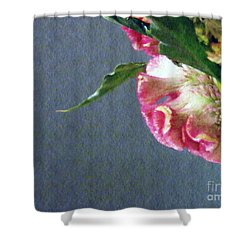 Shower Curtain featuring the photograph Cockscomb Bouquet 6 by Sarah Loft