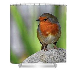 Cocky Robin Shower Curtain