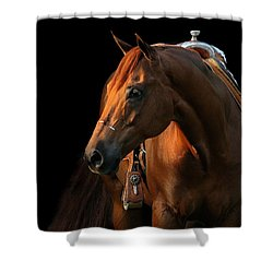 Cocoa Shower Curtain by Angela Rath