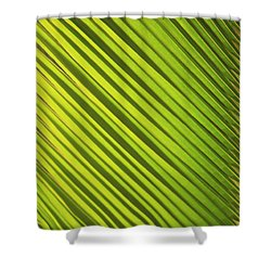 Coconut Palm Shower Curtain by Brandon Tabiolo - Printscapes