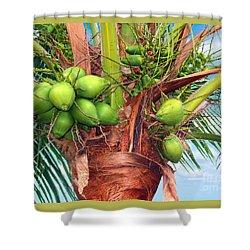 Coconut Palm Treasure Coast Florida C1 Shower Curtain