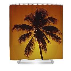 Coconut Palm Tree Sunset Shower Curtain