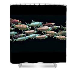 Coho Migration Shower Curtain