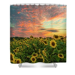 Colby Farm Sunflowers Shower Curtain