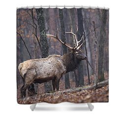 Chilly Misty Morning Shower Curtain