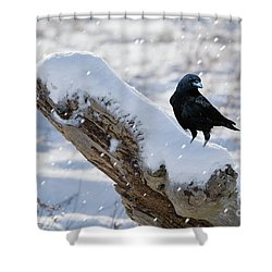 Cold Winter Shower Curtain