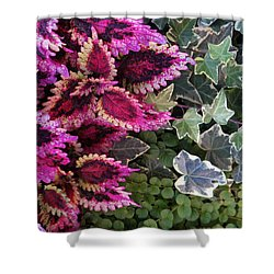 Shower Curtain featuring the mixed media Coleus And Ivy- Photo By Linda Woods by Linda Woods