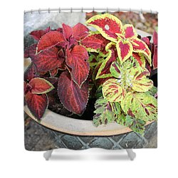 Coleus Shower Curtain