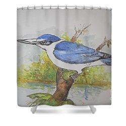 Collared Kingfisher Shower Curtain