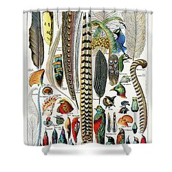 Collection Of Different Plume Types Shower Curtain