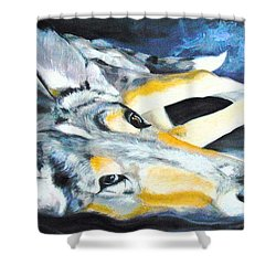 Collie Merle Smooth Shower Curtain