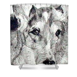 Collie Smooth Lover Shower Curtain