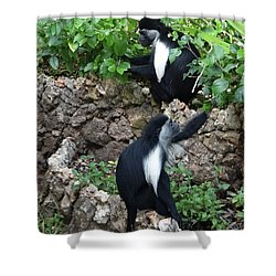 Colobus Monkey Eating Leaves For Breakfast Shower Curtain