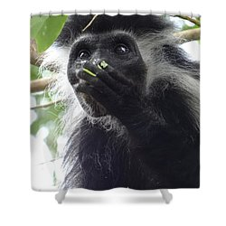 Colobus Monkey Eating Leaves In A Tree 2 Shower Curtain