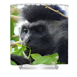 Colobus Monkey Eating Leaves In A Tree Close Up Shower Curtain