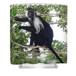 Colobus Monkey Eating Leaves In A Tree Shower Curtain
