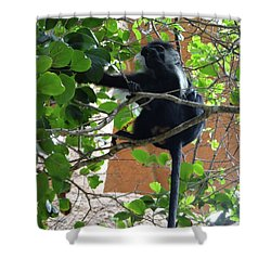 Colobus Monkey Eating Leaves In A Tree - Full Body Shower Curtain