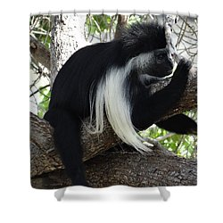 Colobus Monkey Resting In A Tree Shower Curtain