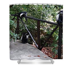 Colobus Monkeys At Sands Chale Island Shower Curtain