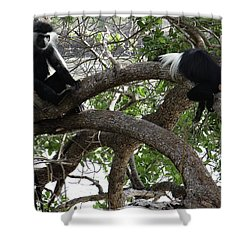 Colobus Monkeys Sitting In A Tree Shower Curtain