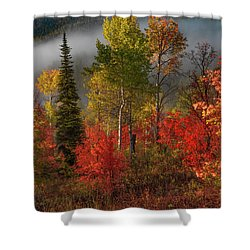 Color And Light Shower Curtain