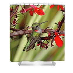 Color Coordinated Hummer Shower Curtain by Debbie Oppermann