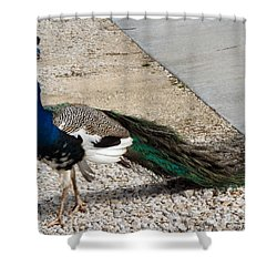 Color Me Royal Shower Curtain by Audrey Van Tassell