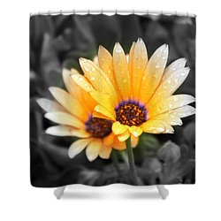 Color My Petals Shower Curtain