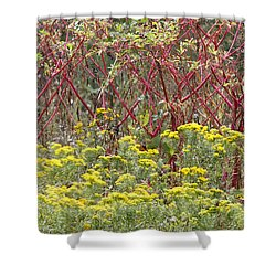 Color My World Shower Curtain