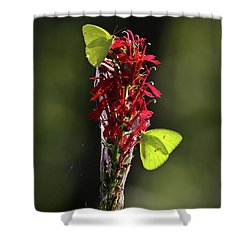 Shower Curtain featuring the photograph Color On Citico by Douglas Stucky