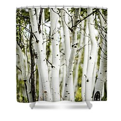 Colorado Aspens Shower Curtain