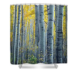 Colorado Aspens Shower Curtain by Inge Johnsson