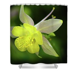 Colorado Columbine Shower Curtain by Marie Leslie