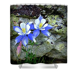 Shower Curtain featuring the photograph Colorado Columbines by Karen Shackles