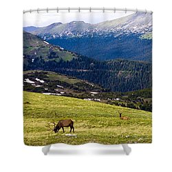 Colorado Elk Shower Curtain by Marilyn Hunt