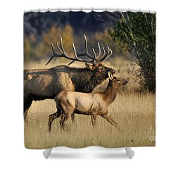 Colorado Elk  Shower Curtain