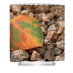 Colorado Fall Colors Shower Curtain
