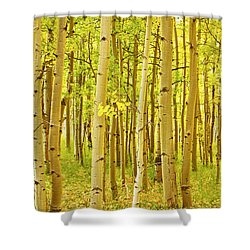 Colorado Fall Foliage Aspen Landscape Shower Curtain by James BO  Insogna