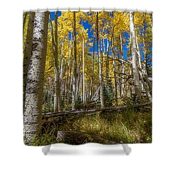 Colorado Fall Hike In The Aspens Shower Curtain